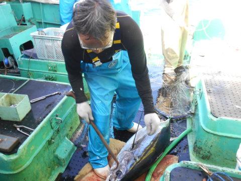 漁獲シーン
